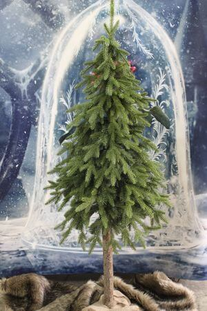 Vianočný stromček na pníku Jedľa 3D 220cm