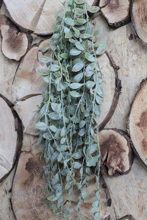 Zelená umelá rastlina aeschynanthus 80cm