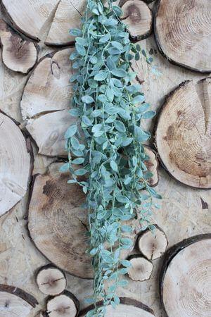 Zelená umelá rastlina aeschynanthus 90cm