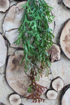 Zelený umelý ťahavý parohovec 75cm