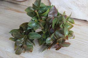 Zeleno hnedá umelá kytička jablkových listov 30cm