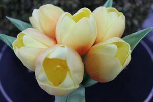 Mű tulipán