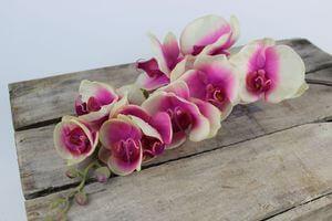 Mű orchidea
