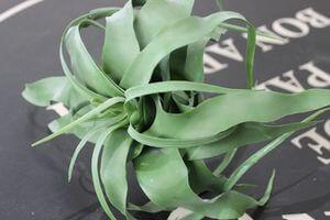 Zelená umelá tillandsia 18cm