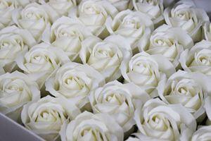 Krémové svetlé mydlové ruže 50ks 6cm