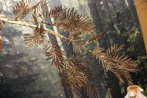 Hnedý lesklý dekoračný konár mimóza 84cm