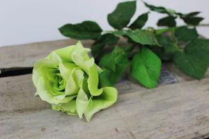 Zelená rozkvitnutá ruža 70 cm