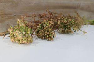 Hnedo zelená umelá bobuľová poľná rastlina 47cm