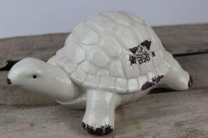 Krémová dekoračná korytnačka 22cm