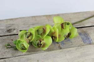 Zelená umelá orchidea 60cm