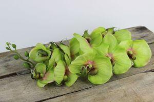 Zelená umelá orchidea s listami a korienkom 70cm