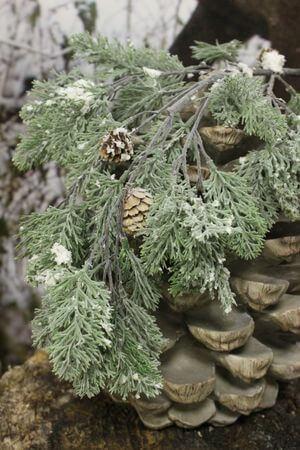 Zelená haluz tujová so šiškami zasnežená 79cm