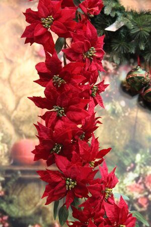 Červená girlanda z vianočnej ruže 160cm