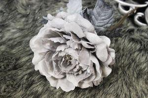 Sivá svetlá sametová ruža 14cm