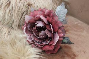 Staročervená sametová ruža 14cm