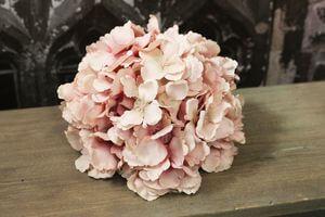 Ružová hortenzia hlava 20cm